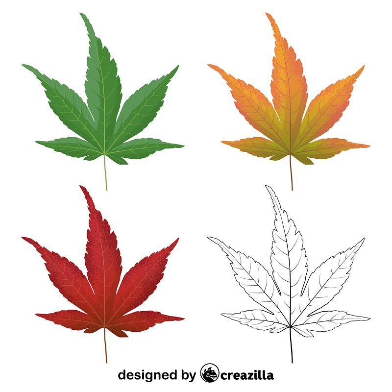 Japanese maple leaves vector