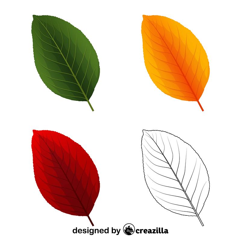 Pear tree leaves vector