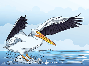 White Pelican vector