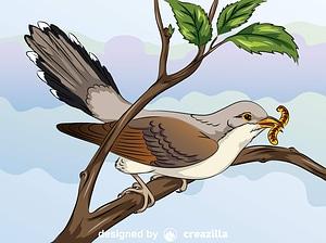 Yellow-Billed Cuckoo vector
