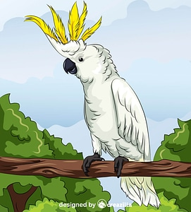 Yellow-Crested Cockatoo vector