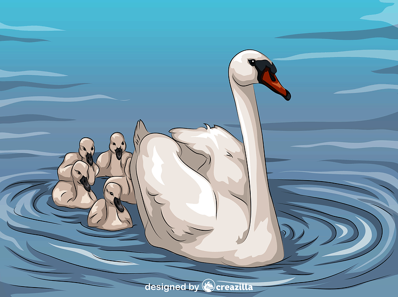 Swan and Cygnets vector