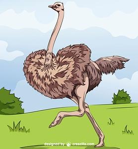 Running Ostrich vector