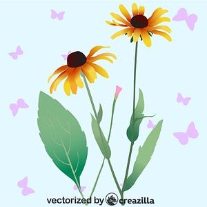 Black Eyed Susan Flower vector