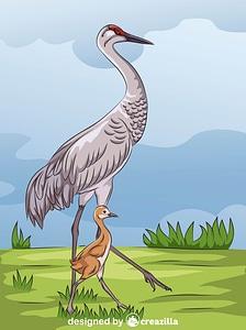 Sandhill Crane vector