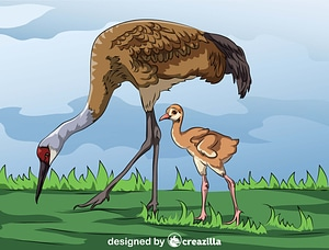 Sandhill Crane with Baby vector