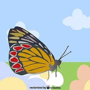 Butterfly Orange Gonepteryx Rhamni vector