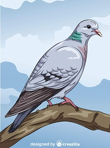 Stock Dove vector