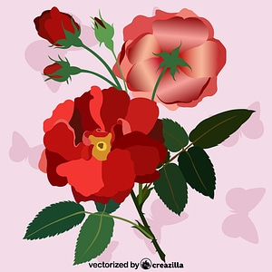 Red Rose Vintage vector