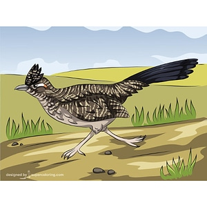 Roadrunner Running vector