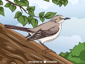 Northern Mockingbird vector