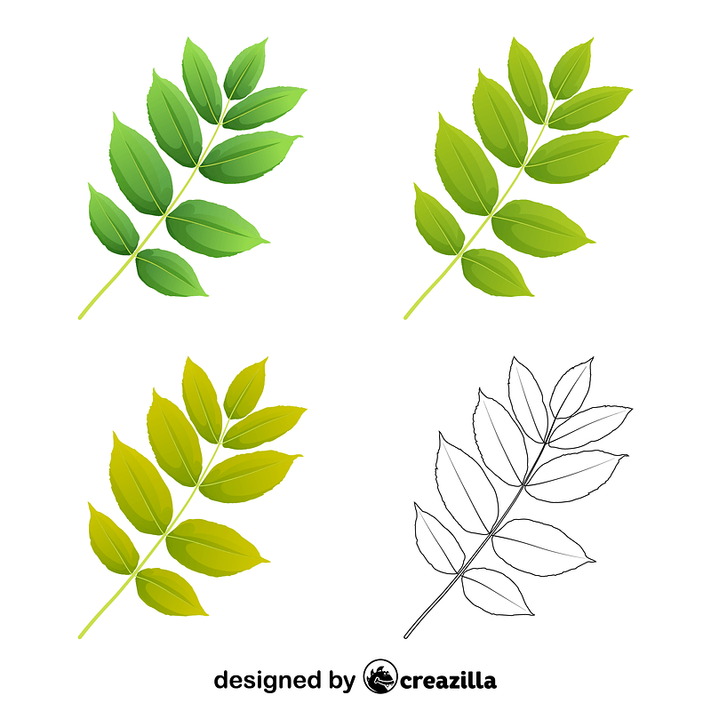 Black ash leaves vector
