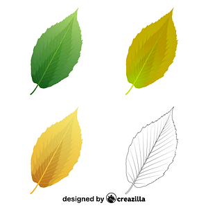 Black birch leaves vector