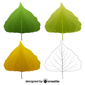 Black poplar leaves vector