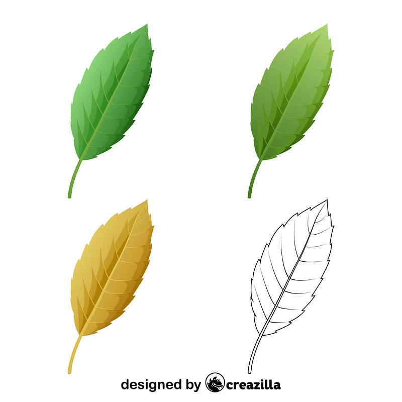 Cork oak leaves vector