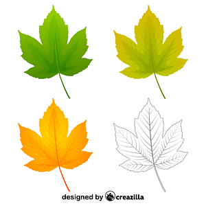 Field maple leaves vector