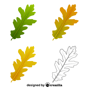 Turkey oak leaves vector