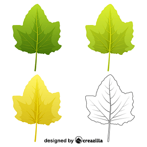 White poplar leaves vector