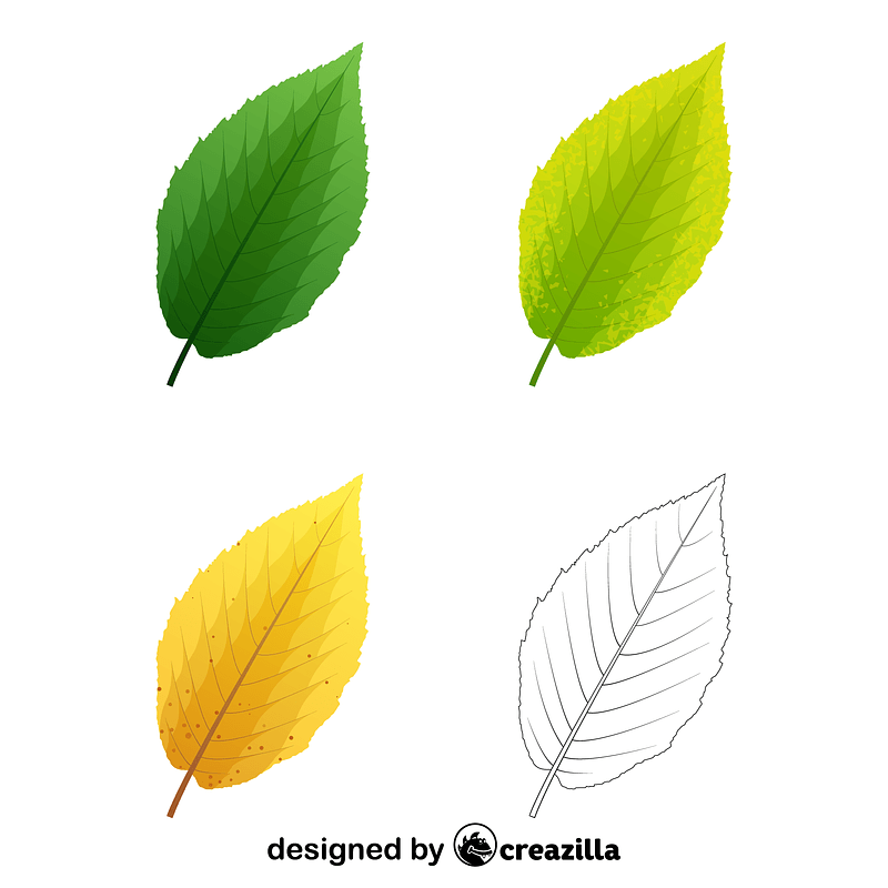 Yellow birch leaves vector