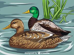 Mallard Ducks Swimming vector