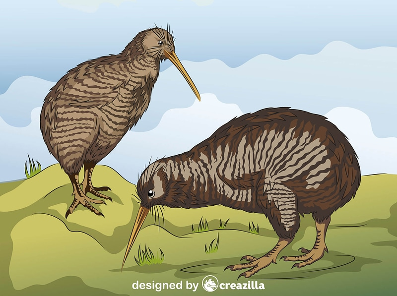 Little Spotted Kiwi vector
