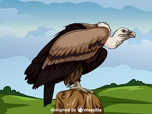 Long Billed Indian Vulture vector
