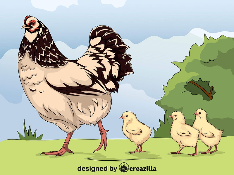 Hen and Chicks vector