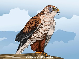 Ferruginous Hawk vector