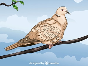Collared Dove vector