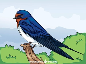 Barn Swallow vector