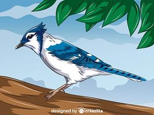 Blue Jay vector