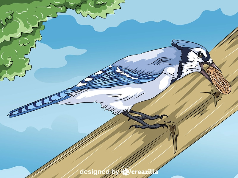 Blue Jay with Peanut vector
