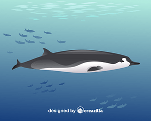 Spade-toothed whale vector