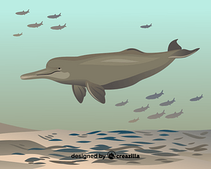 South Asian river dolphin vector