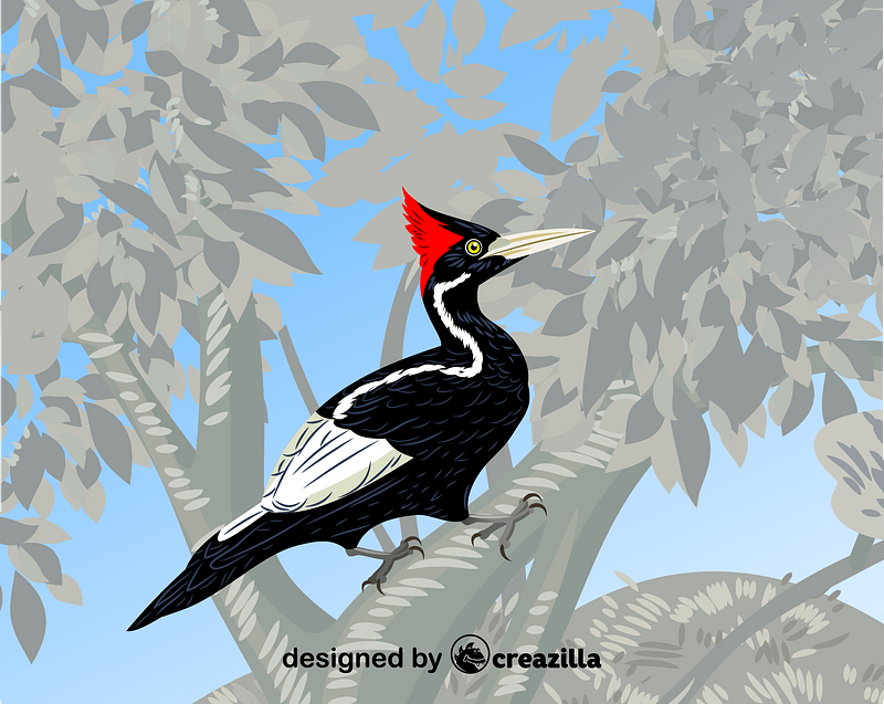Ivory-billed woodpecker ベクターイメージ狐