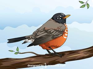 American Robin vector