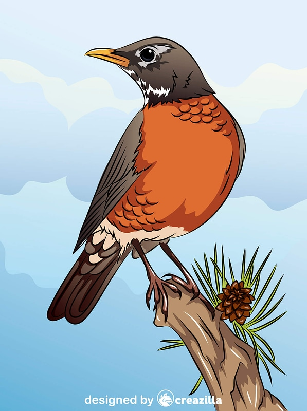 American Robin on the Branch vector