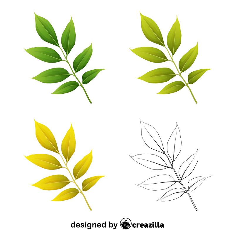 Arizona ash leaves ベクターイメージ狐