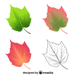 Mountain maple leaves vector