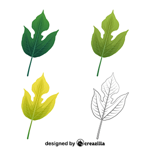 Paper mulberry leaves vector