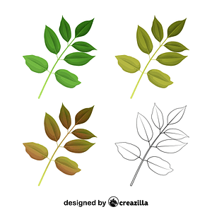 Texas ash leaves vector