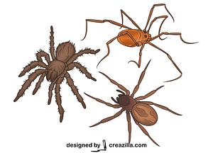 Set of Spiders vector