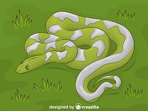 Boa Snake vector