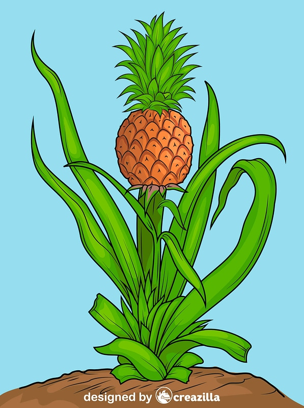 Pineapple Plant vector