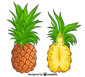 Pineapple Cut in Half vector