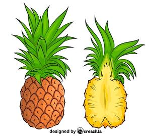 菠萝切成两半矢量图像
