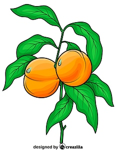 Peaches on the Branch vector