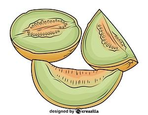 Melon Cut into Pieces vector