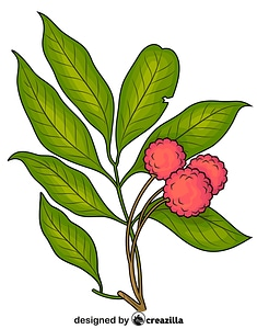 Lychee on the Branch vector
