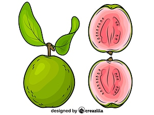 Whole Guava and a Half vector
